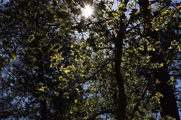 door de bomen